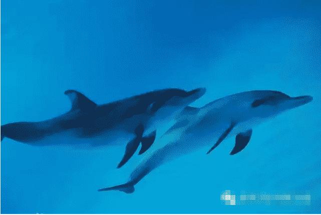 衡阳海立方海洋公园年卡预售