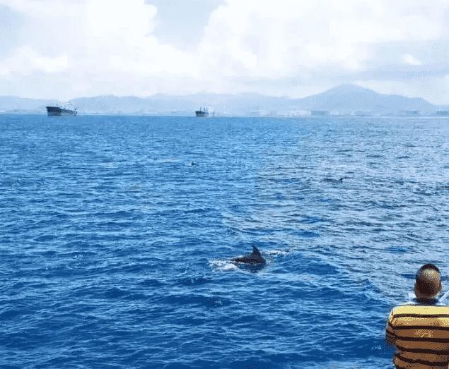 三亚凤凰岛周边海域发现成群海豚