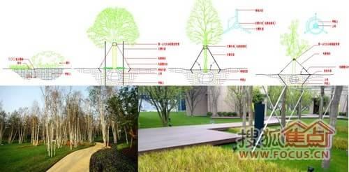 景观植被手绘图片