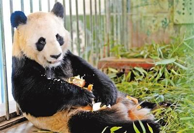 兰州市动物园的大熊猫